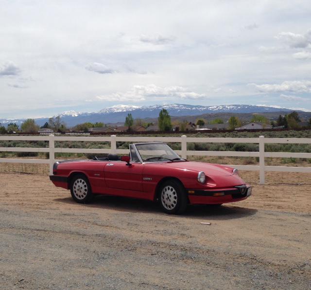 1986 Alfa Romeo Spider (SPIDER) : Registry : The Alfa