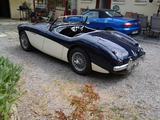 1954 Austin Healey 100 Deep Blue Old English White nigel rawson